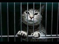 Кошмар на Волгоградском проспекте: в подвалах живьем замуровали кошек