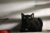 В Москве замуровали живых кошек в подвалах жилых домов