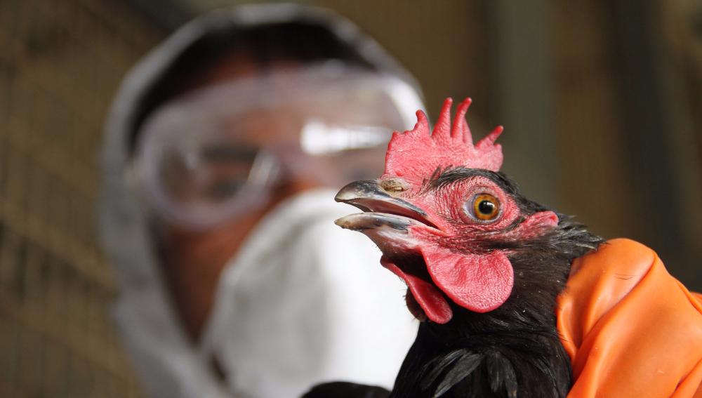 Роспотребнадзор подтвердил вспышку птичьего гриппа в Подмосковье