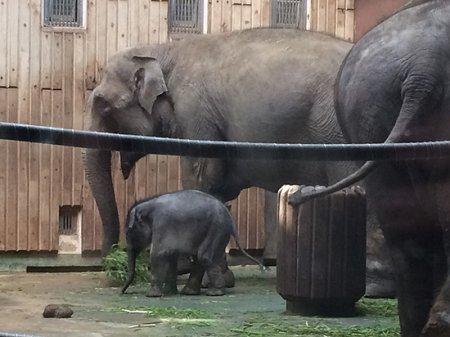 Самый маленький хобот: «Энергетика у слонов сумасшедшая»