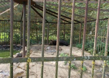 Зэк Михалыч: жители Талдомского района возмущены условиями содержания медведя-убийцы