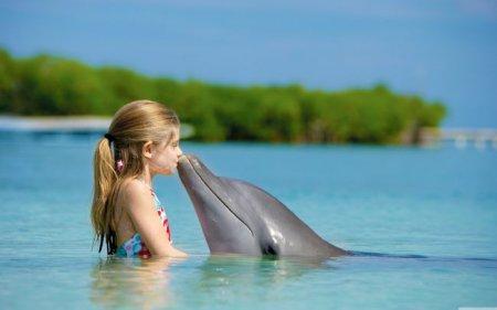 Взаправду ли дельфины настолько башковиты, будто о них болтают?