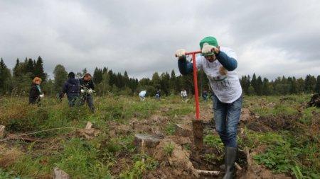 Губернатор призвал застройщиков участвовать в акции «Наш лес. Посади свое дерево»