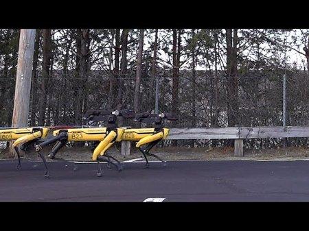 Упряжка из десяти робо-псов SpotMini от Boston Dynamics протащила целый грузовик
