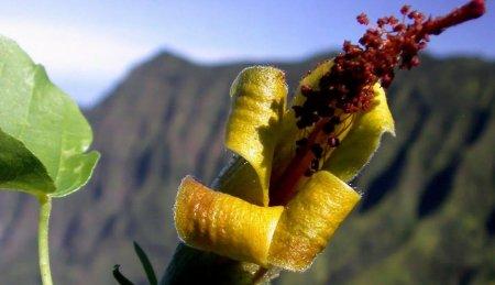 #видео   Дрон обнаружил растение, которое считалось стертым с лица Земли