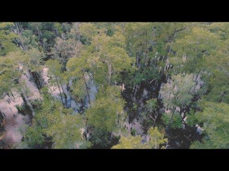 В американском болоте нашли дерево возрастом 2624 года — одно из древнейших на планете