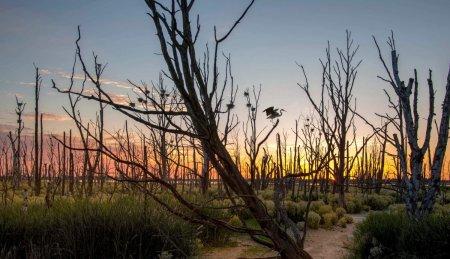 Человечество уничтожает природу. 500 видов растений потеряны безвозвратно