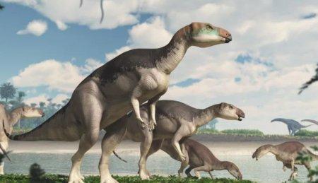 В Австралии найдены останки нового динозавра, украшенные драгоценными камнями