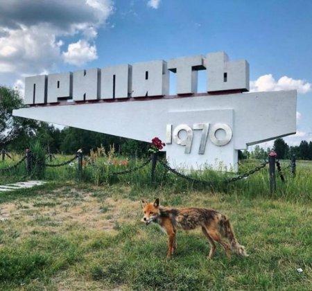 Как выглядит Чернобыль сегодня?