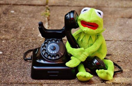 Создан телефон для лягушек. Но зачем он нужен?