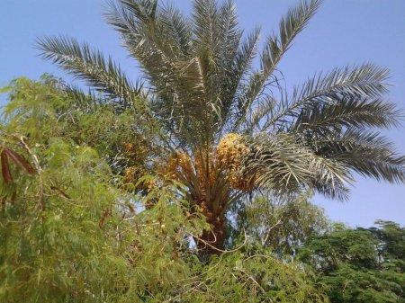 Давно потерянные фруктовые деревья были выращены из 2000-летних семян