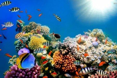 Коралловые рифы могут полностью исчезнуть в 2100 году
