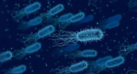 Бактерии способны останавливать свой рост, чтобы спастись от антибиотиков