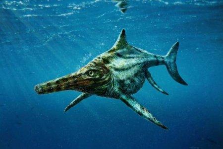 Ихтиозавр давил раковины моллюсков круглыми зубами