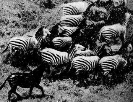 Какие бывают мутации и чем они отличаются