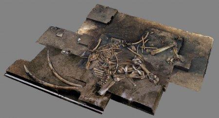 Какие слоны жили 300 000 лет назад и почему они вымерли?