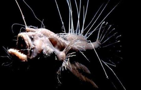 Самые страшные рыбы нашей планеты