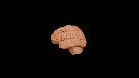 Если люди такие умные, то почему мозг становится меньше?