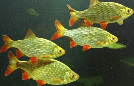 Почему рыбы не замерзают в холодной воде?