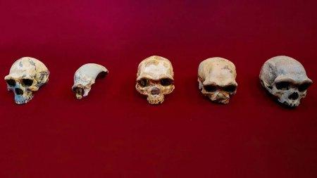 Череп Homo longi обнаружен в Китае. Он жил на Земле 146 000 лет назад
