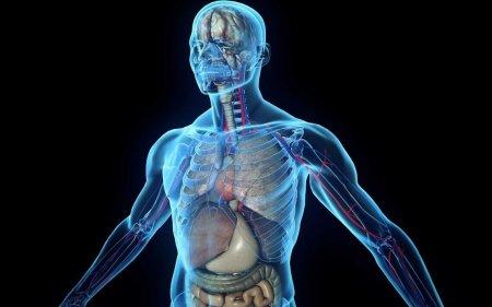 ТОП 5 мифов о нашем теле, в которые вы продолжаете верить